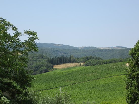 Podere San Luigi: View from dining room