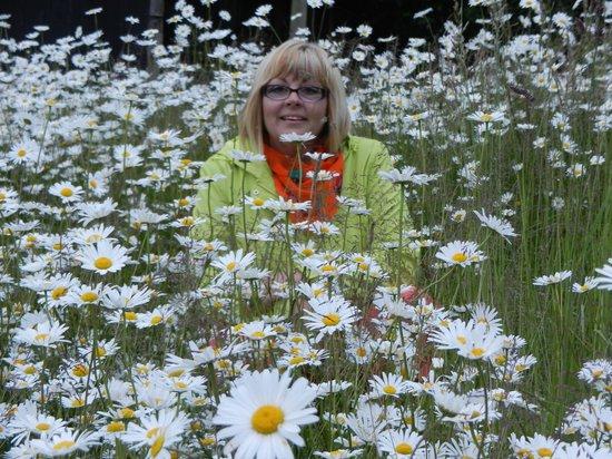 jardins avec ses superbes fleurs picture of au fief des