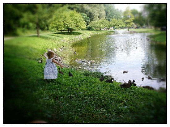 A little girl (parents nearby for photos) visiting with Ducks on Congress Park's southern pond