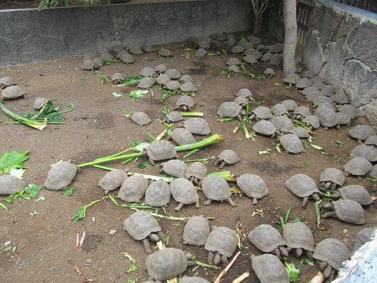 Centro de Crianza Arnaldo Tupiza: Lunch Time at Tortoise Breeding Center