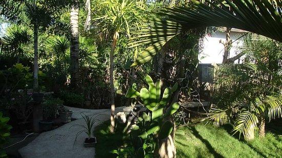 Black Sand Homestay: le jardin