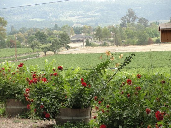 Tres Sabores Winery : View from Picnic Area