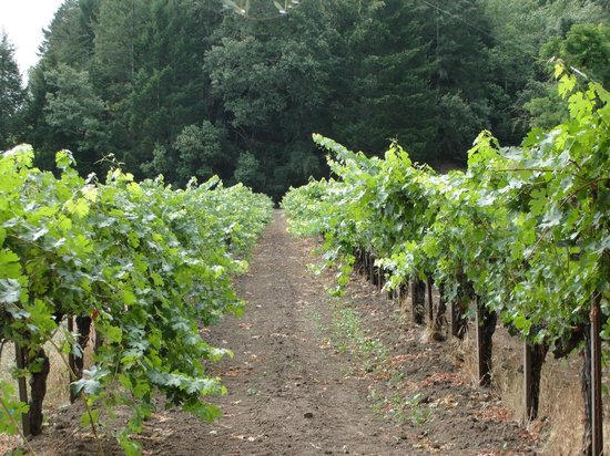 Tres Sabores Winery : Vines were full!