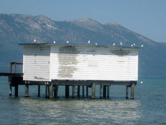 Thomas F. Regan Memorial Park: Seagulls