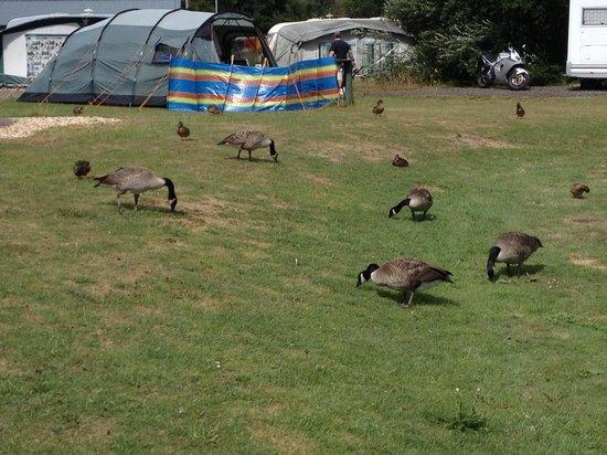 Green Hill Farm Camping & Caravan Park: Wild life