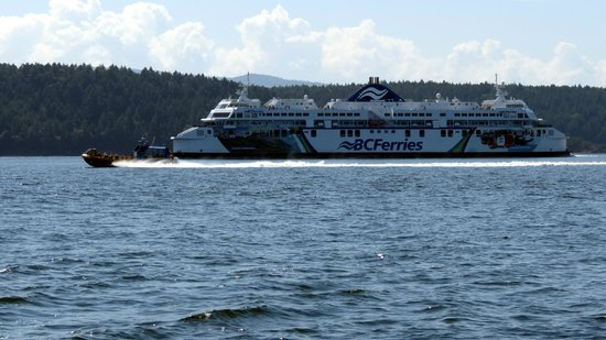 Vancouver Whale Watch: Beating the BC ferry