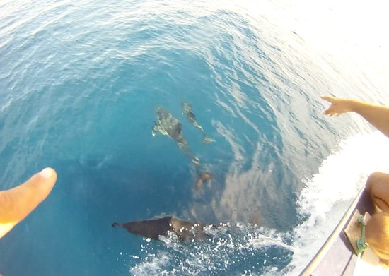 dolphins with Gigante expeditions