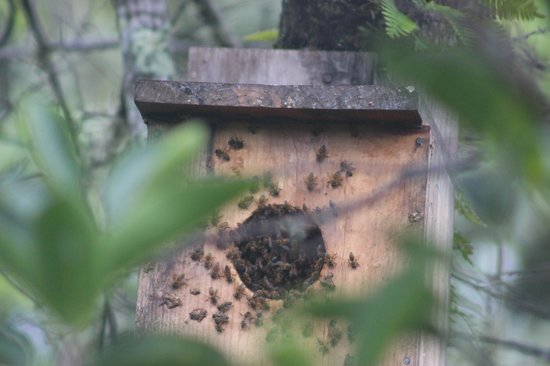 Daggerwing Nature Center: bees took over a bird box