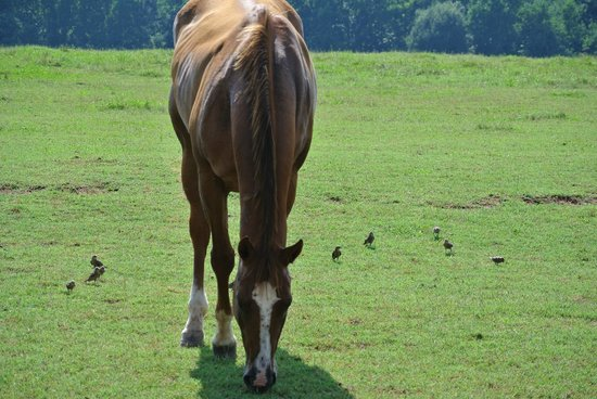 Southern Cross Ranch: One of the horses on the ranch