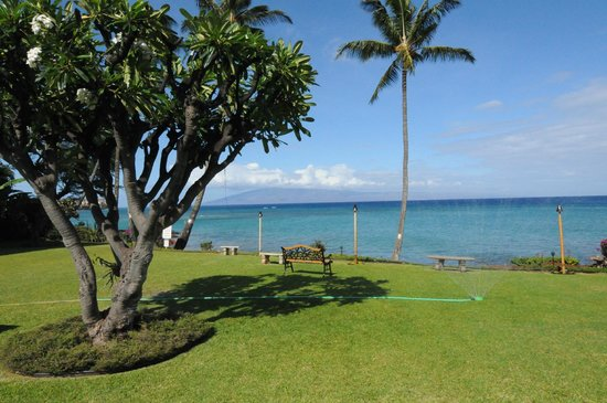Polynesian Shores: nicely maintained