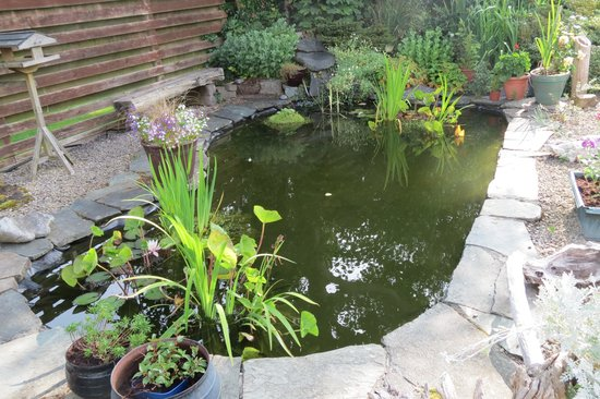 Kingfisher Lodge: The backgarden