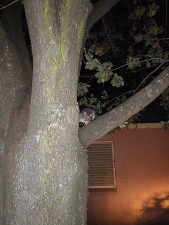 MONA Country Manor House: Possum magic