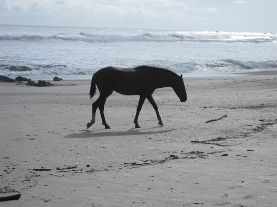 Hotel Tropico Latino: one of 3 horses just walking by
