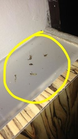 Nest Boutique Hotel: mosquitos i killed for my 4 nights i stayed in this hotel... they dont care.