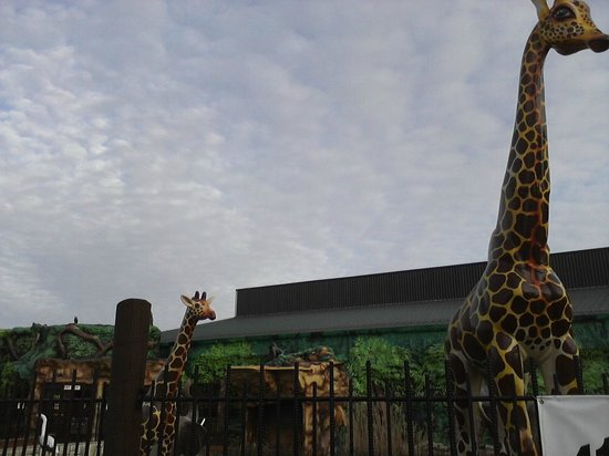Jungle Jim's International Market : Out front looks like an amusement park