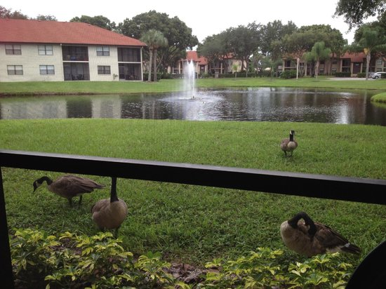 Shorewalk Vacation Villas: view from balcony with ducks passing by :-)