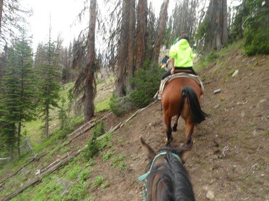 Brooks Lake Lodge and Spa: horseback riding up the mountain