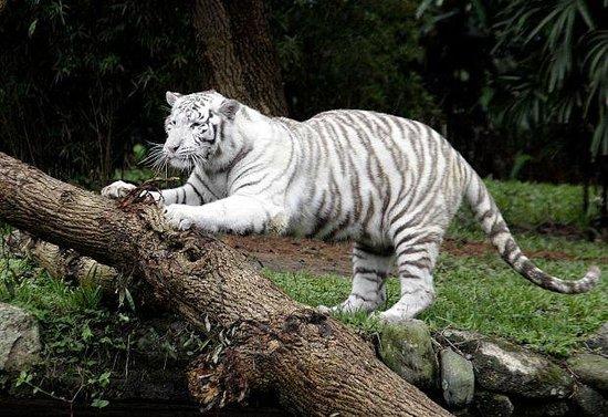 サンパウロ動物園