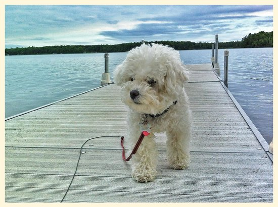 Dillman's Bay Resort: Several well behaved dogs around the area.