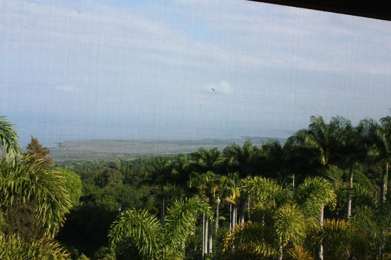 Aloha Guest House: View from breakfast table