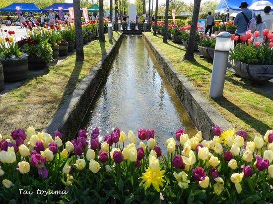 Tonami Tulip Gallery: อีกมุมกับดอกทิวลิป