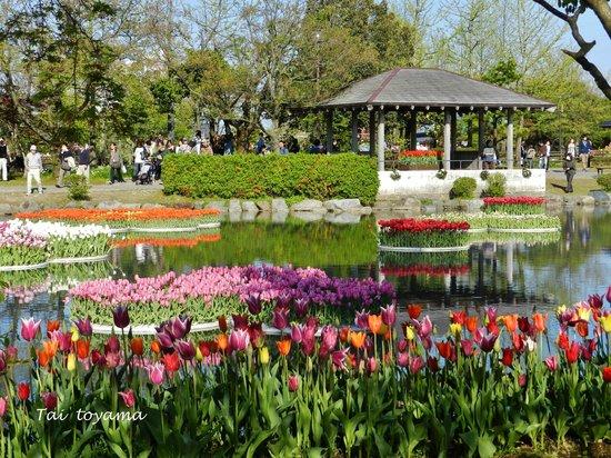 Tonami Tulip Gallery: ทิวลิปกลางสระน้ำ