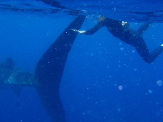 Scorpio Divers Tours: whale shark fin vs my hand!!