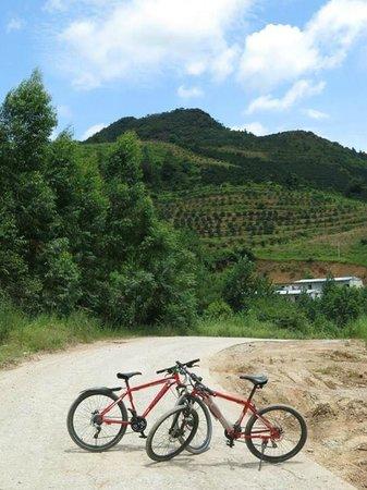 Xing Ping: biking to Longjing