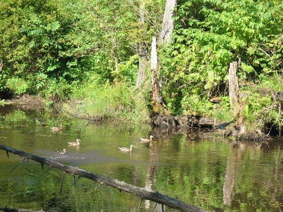 Cascade Falls Bed & Breakfast : Beaver pond