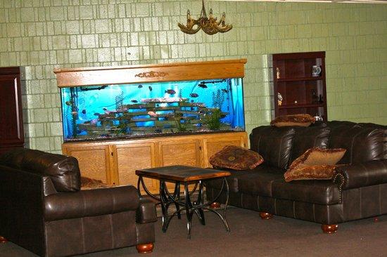Hiawatha Lodge Inn : Beautiful fish tank. Owner feeds them every morning.