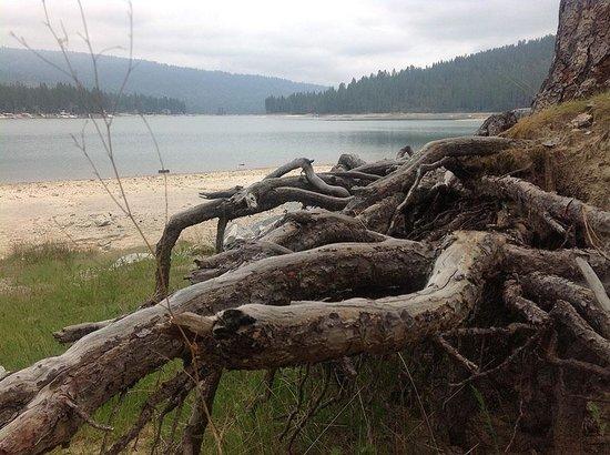 The Pines Resort: Bass Lake