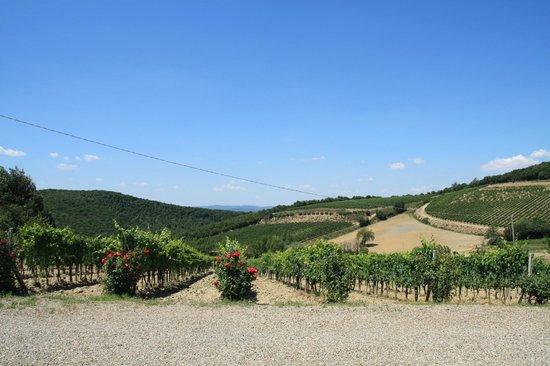 De Gustibus Tours : Montacino vineyard