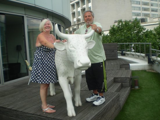 Staying Cool at the Rotunda: With our own cow (not bull) on balcony