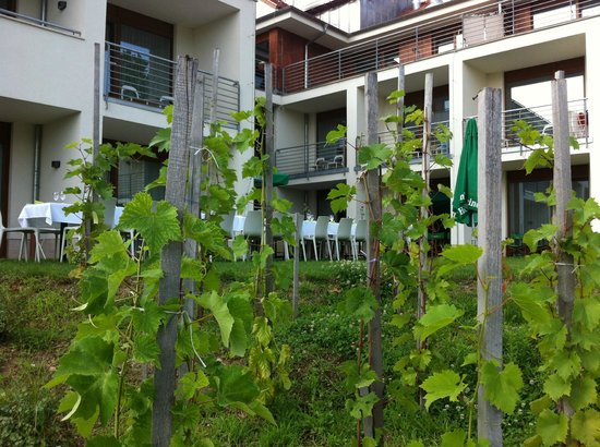 Hotel Bonvino Wine and Spa Badacsony: The harvest is in August-Spetember
