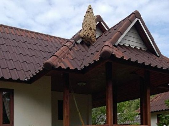 Malibu Beach Bungalows: Massive bee hive at one of the bungalows