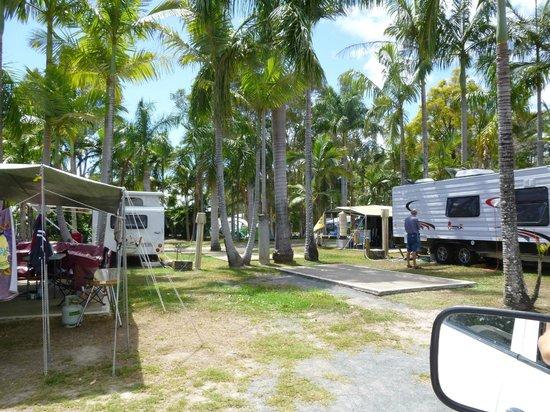 Noosa Caravan Park : Caravans