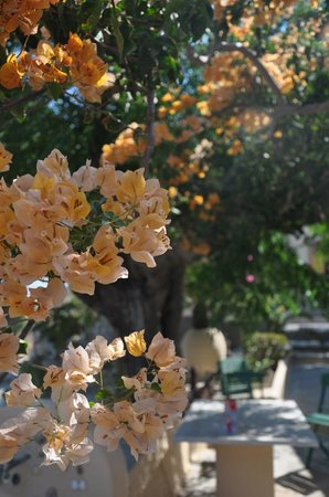Anthippi Guesthouse : garden