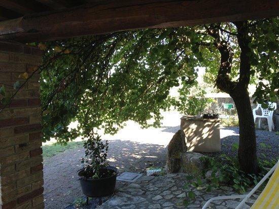 Il Casale di Mario : sotto gli alberi...