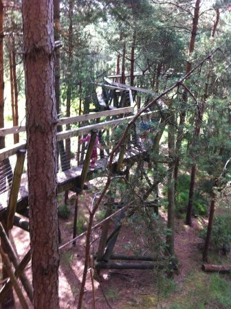 Moors Valley Country Park and Forest: Treetop walk