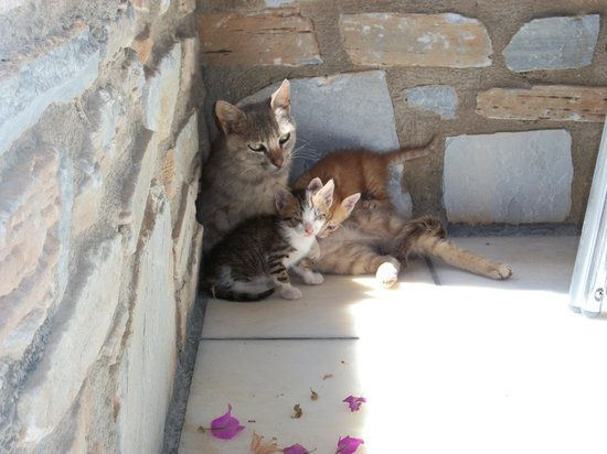 Brothers Hotel: Mother and kittens by our room