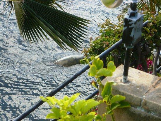 Garden Isle Cottages: Tartaruga, diametro 1,50 circa, sotto il balcone: la scaletta ti permette un bagno veloce