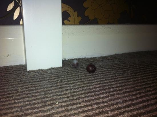 Judd's Folly Hotel: old grapes under the bed