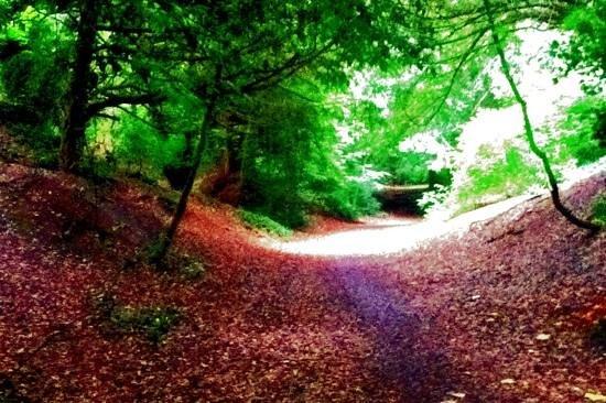St. Anne's Park, Dublin: sentiero nel boschetto