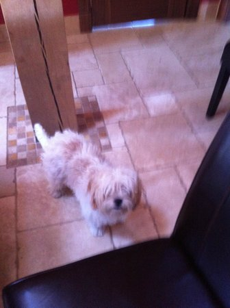 Backbrae House: Millie