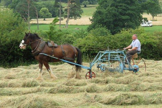 Muckross Traditional Farms: The Hay Rake