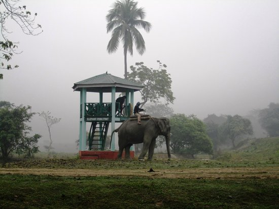 Pobitora Wildlife Sanctuary: Boarding tower for elephant safari