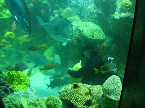Feeding Time Picture Of New England Aquarium Boston