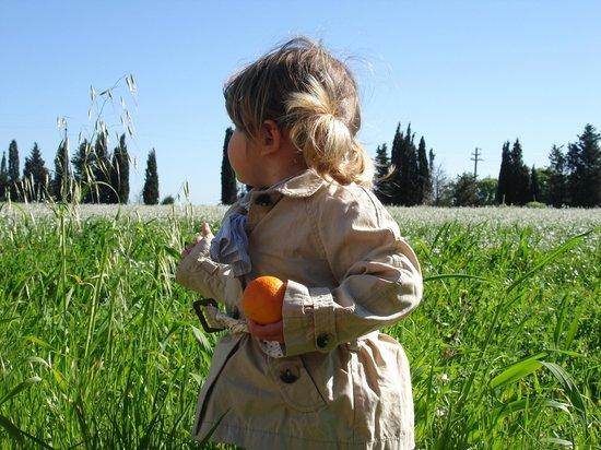 Masseria Fracchicchi: verde circostante