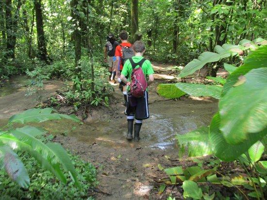 Drake Bay, Costa Rica: Follow the leader.