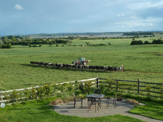 Bunratty Meadows Bed and Breakfast : View from room
